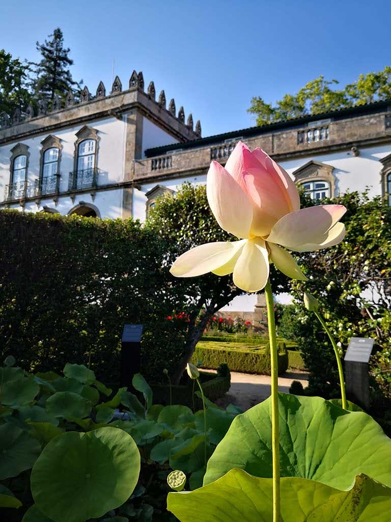 In the garden of Casa da Ínsua